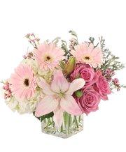 Florist Pos Software - Hana Floral POS